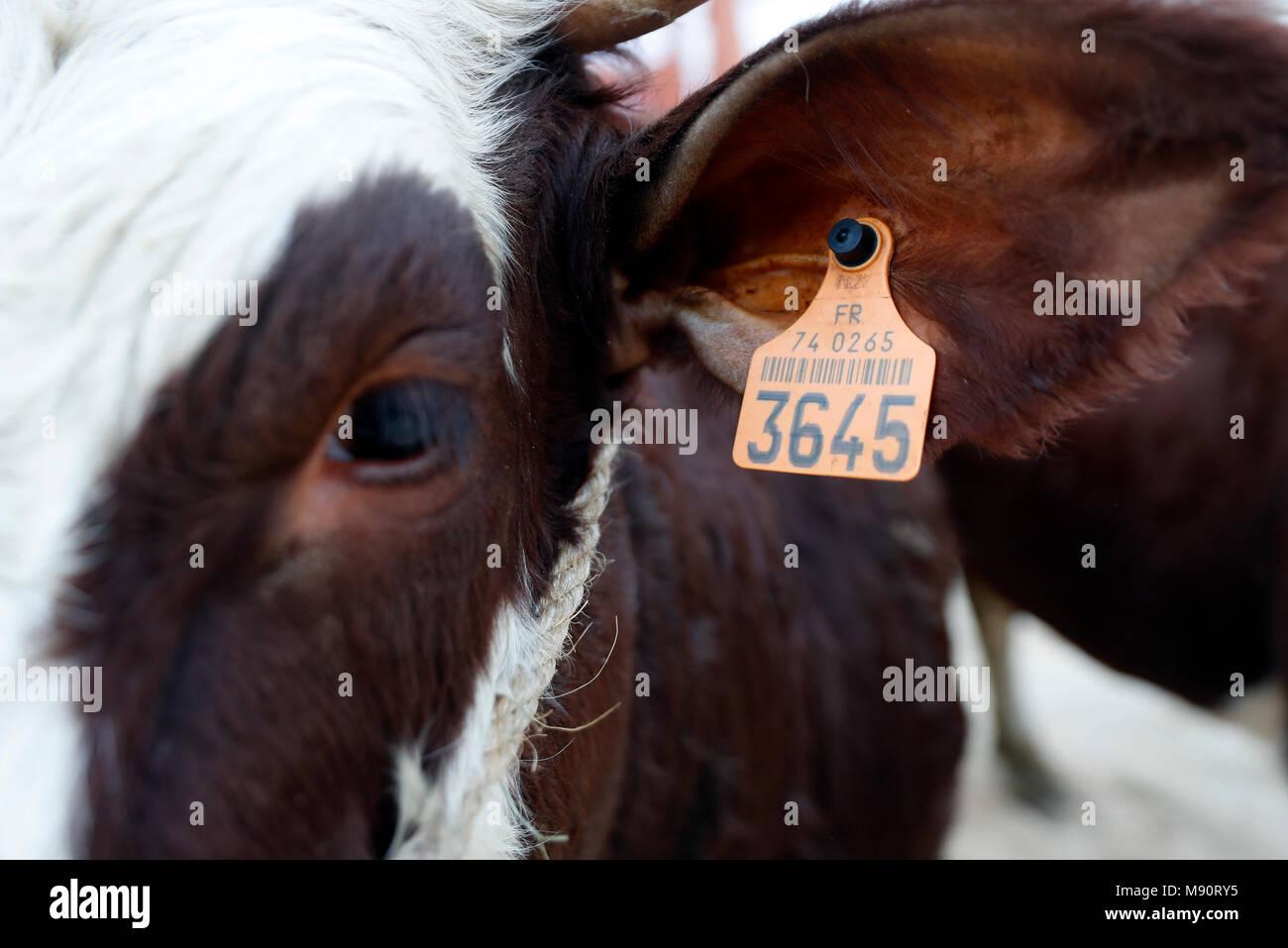 The agriculture fair (Comice Agricole) of Saint-Gervais-les-Bains. - Stock Image