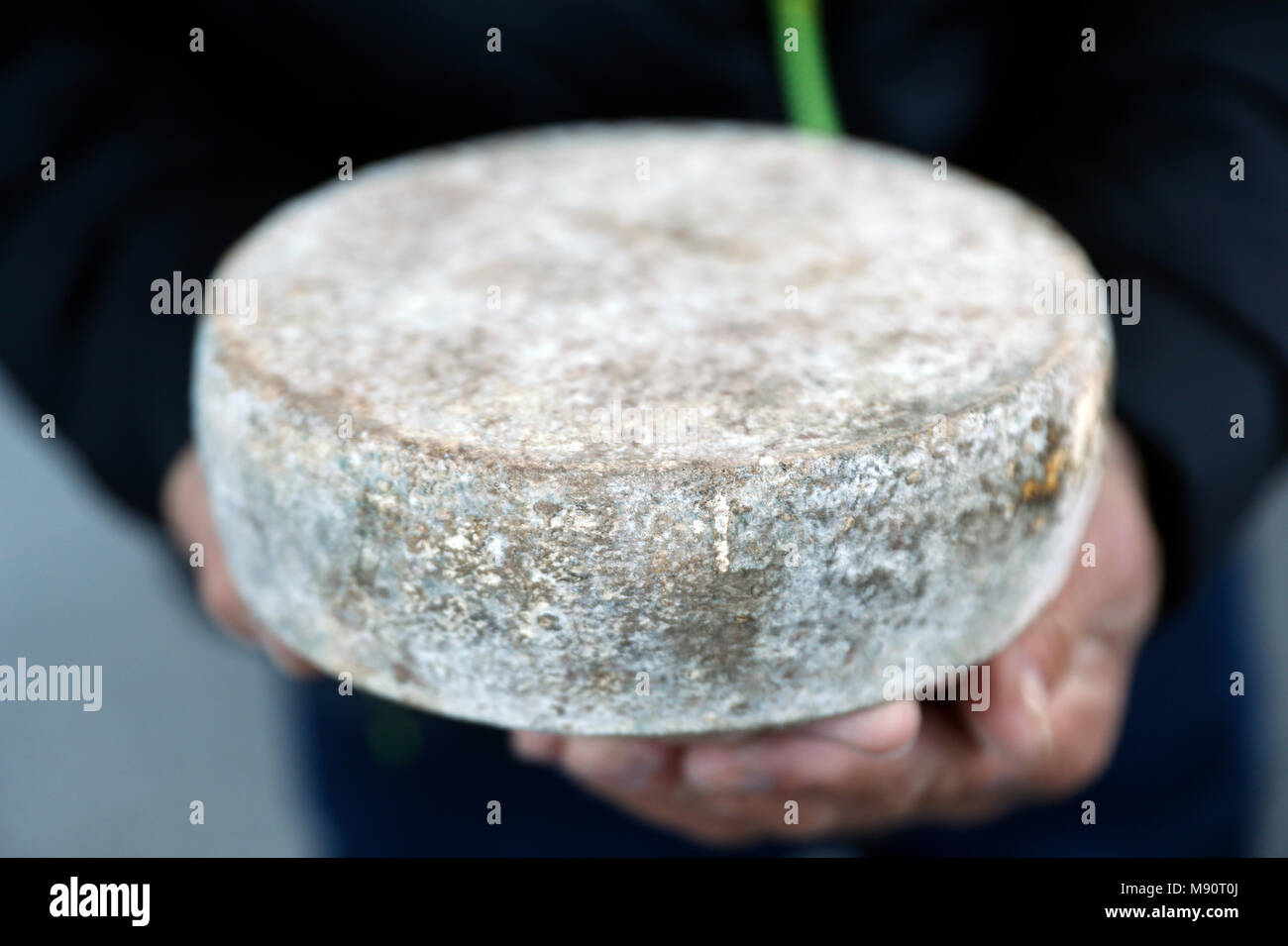 French cheese. Tomme de Savoie. - Stock Image