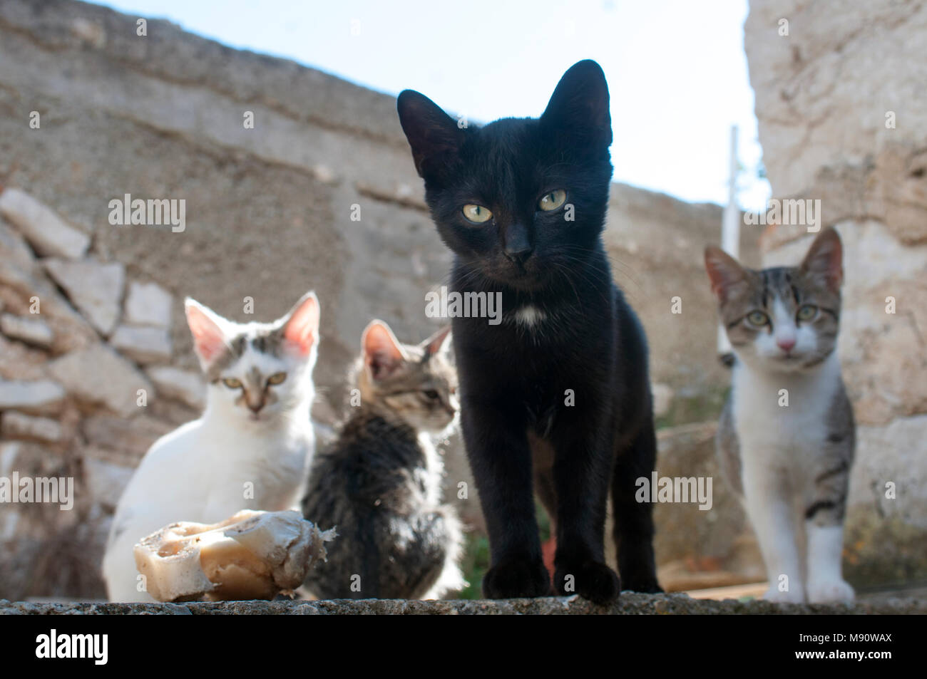 tramp cats - Stock Image