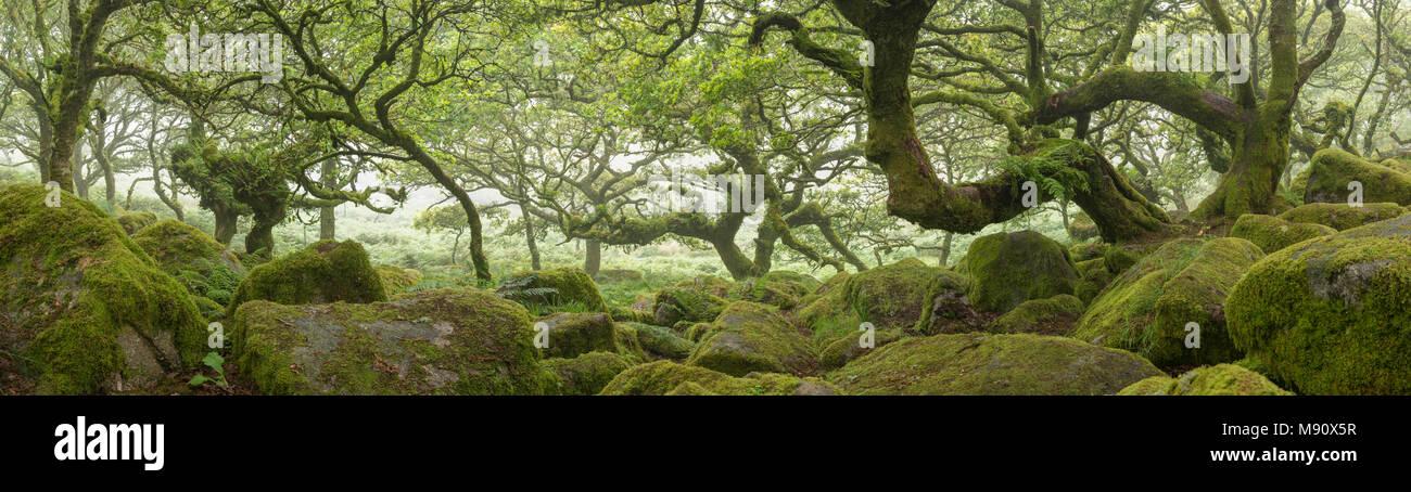 Panoramic photograph of Wistman's Wood SSSI in Dartmoor National Park, Devon, England. Summer (July) 2017. - Stock Image