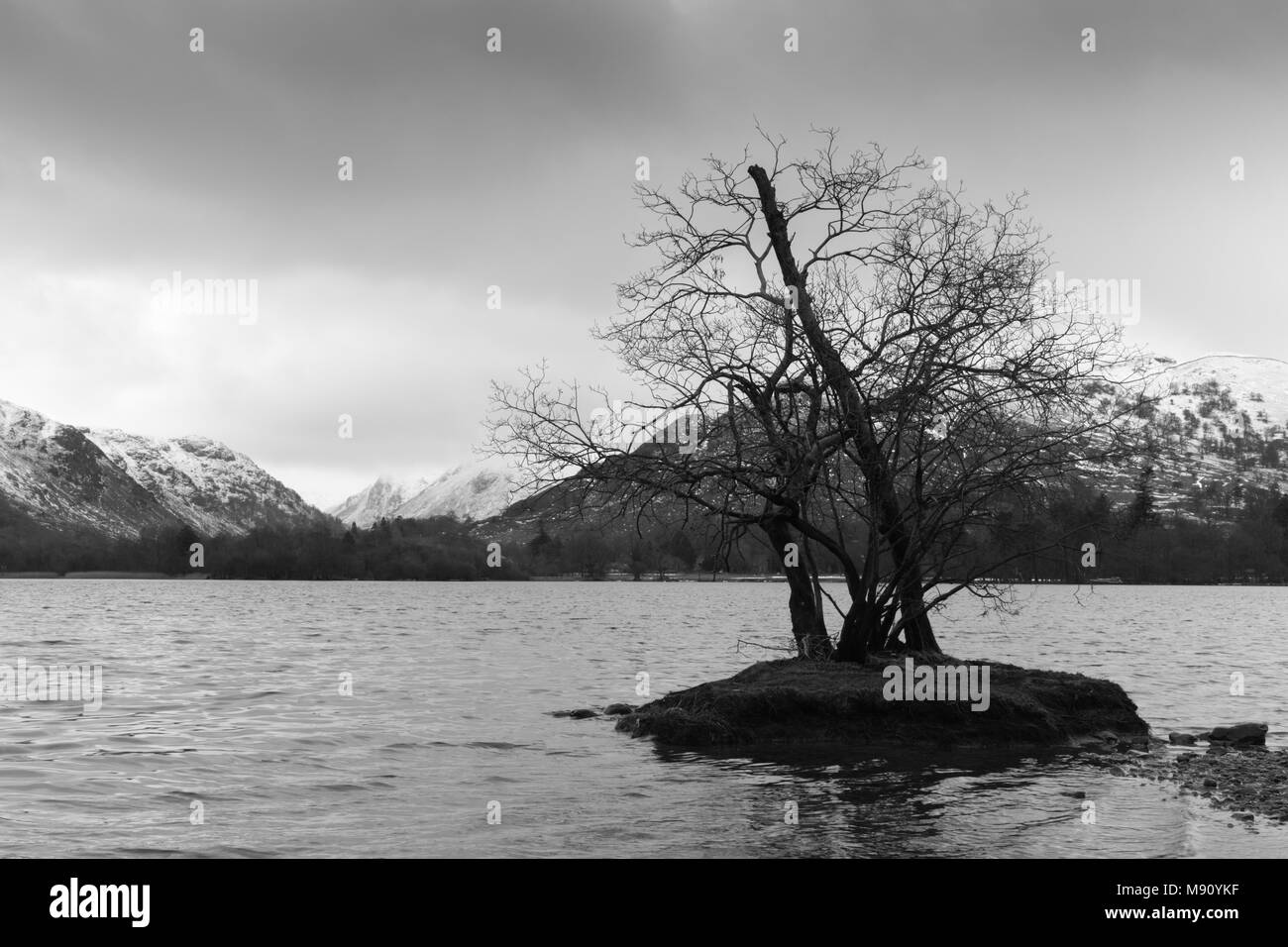 A tree on a small island in Ullswater, Lake District, Cumbria. Snow covered fells and hills are in the background and the sky is overcast. - Stock Image