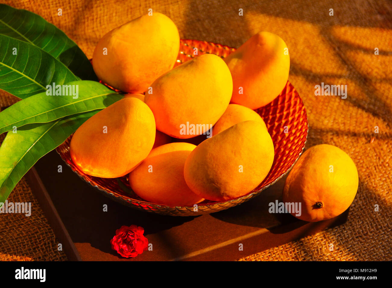 Alphonso mango is a seasonal fruit, considered to be among the most superior varieties of the fruit in terms of sweetness, richness and flavour.The va - Stock Image
