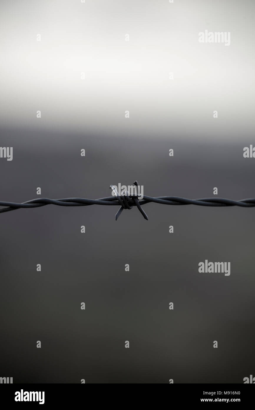 Single barb wire on a foreboding two tones of grey. - Stock Image