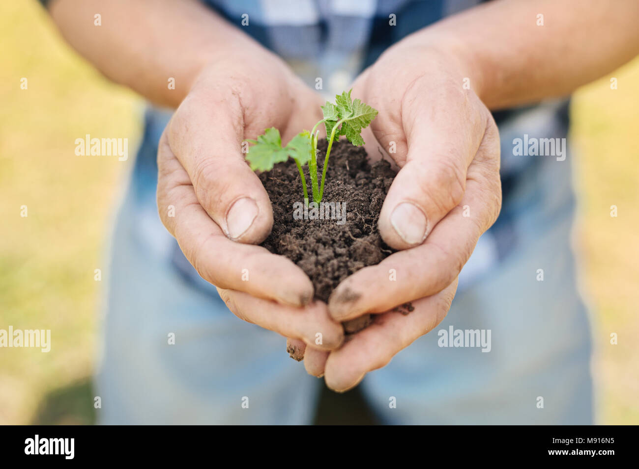 Pleasant man holding a handful of soil - Stock Image