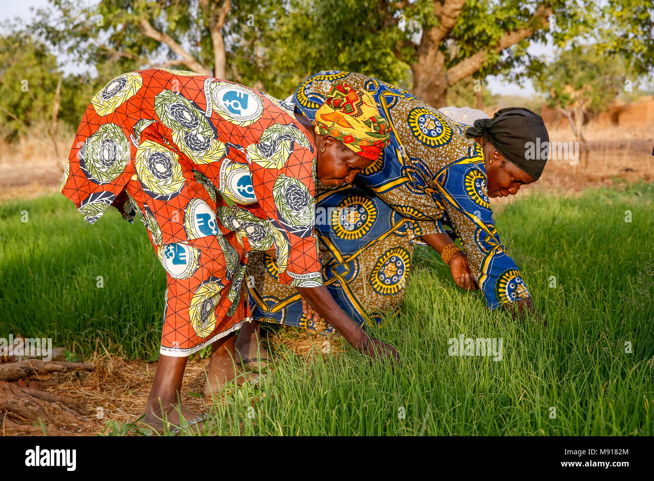 UBTEC NGO in a village near Ouahigouya, Burkina Faso. Members of a cooperative at work in a vegetable garden. - Stock Image