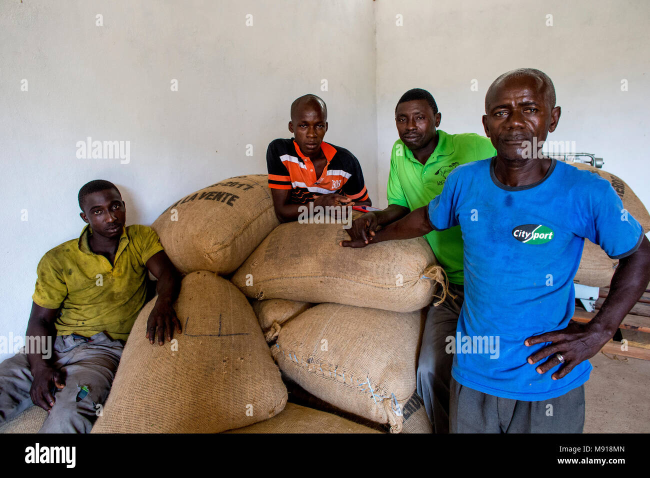 Ivory Coast. Cocoa cooperative members in a warehouse. - Stock Image