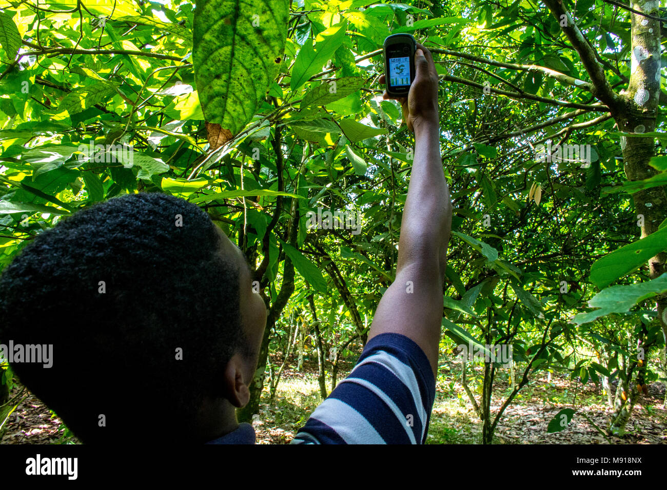 Ivory Coast. Geographical localization of a cocoa plantation with a GPS. - Stock Image