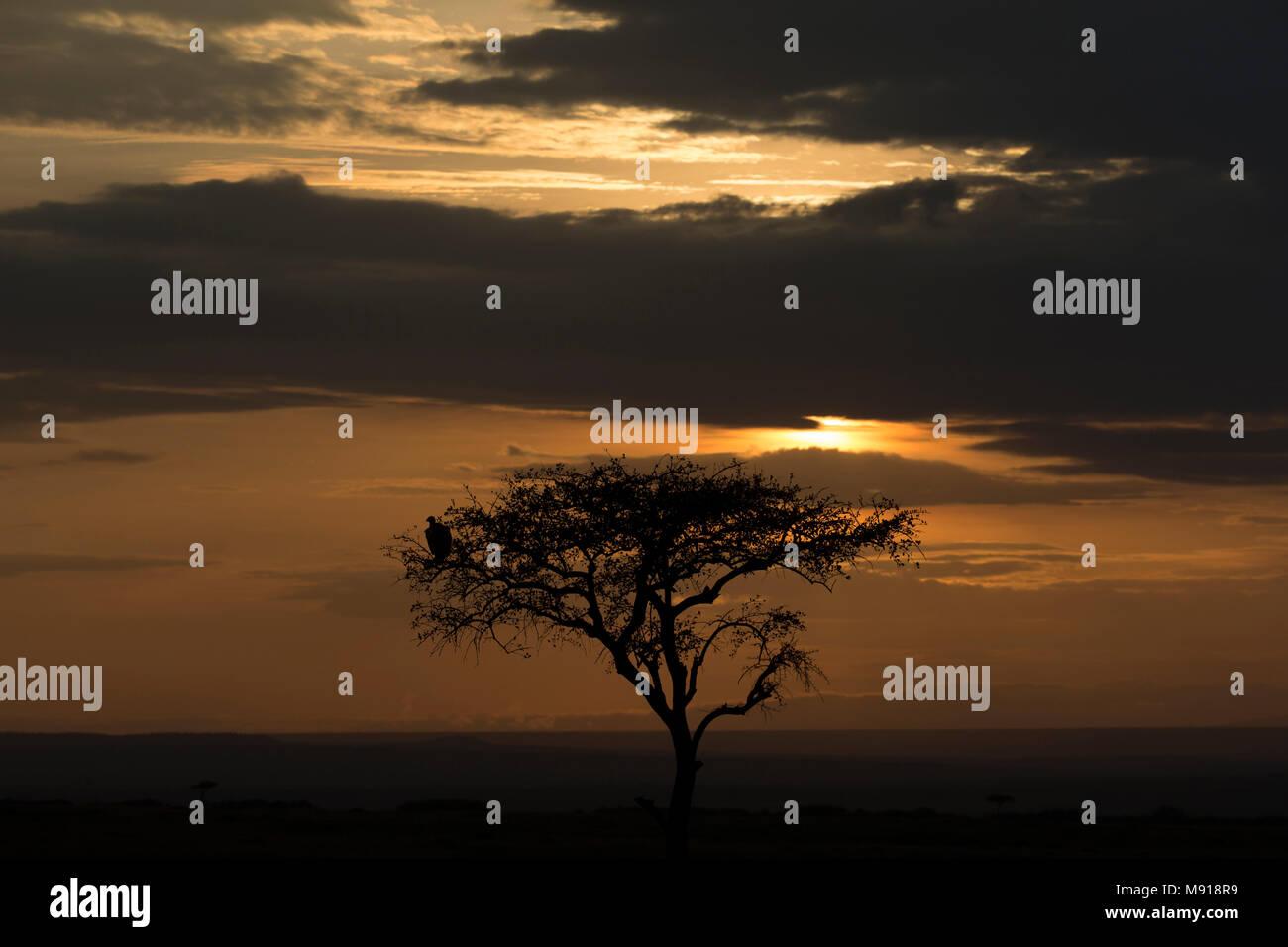Sun rising over savanna.  Masai Mara game reserve. Kenya. Stock Photo