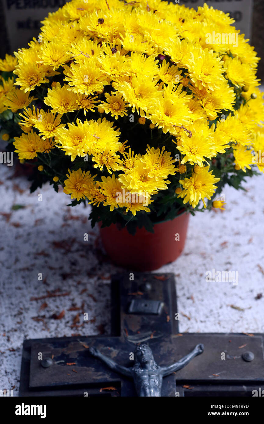 Cemetery on All Saints' Day. Chrysanthemum on grave.   Saint Gervais. France. - Stock Image