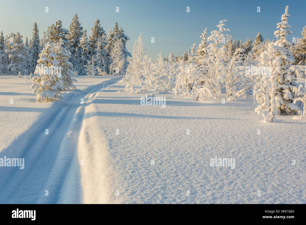 Snowmobile track in the snow with snowy spruce trees and blue skye and warm light, Gällivare, Swedish Lapland, Sweden Stock Photo