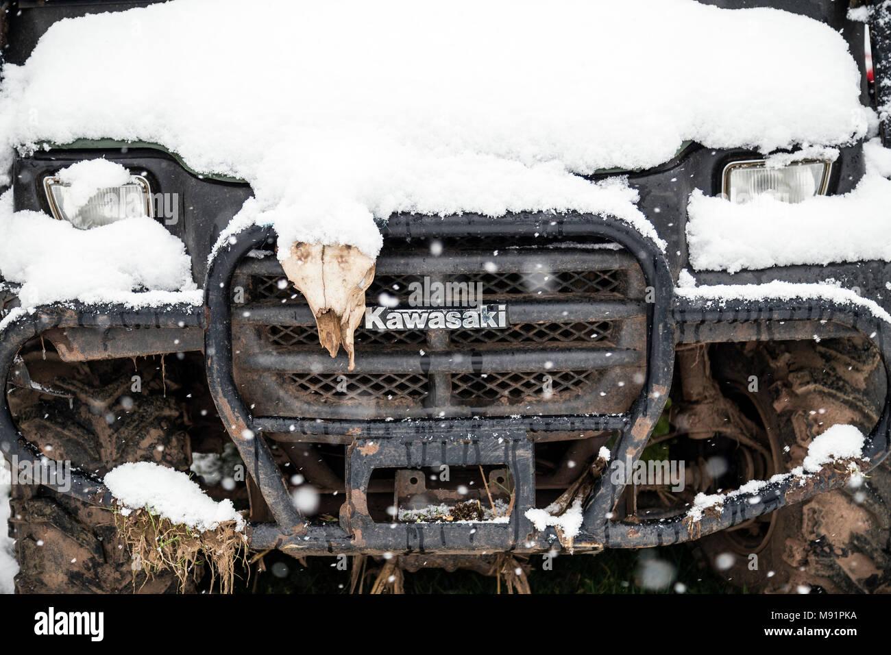 snowstorm near Dunsford Devon, snow blast, snow squall white-out,snowflakes, flakes, snowdrift, snowfield, snowpack snowfall, snowstorm, blizzard - Stock Image