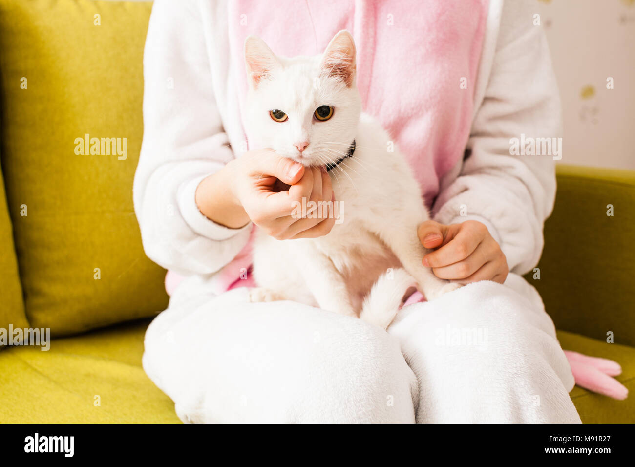 happy obedient cat - Stock Image