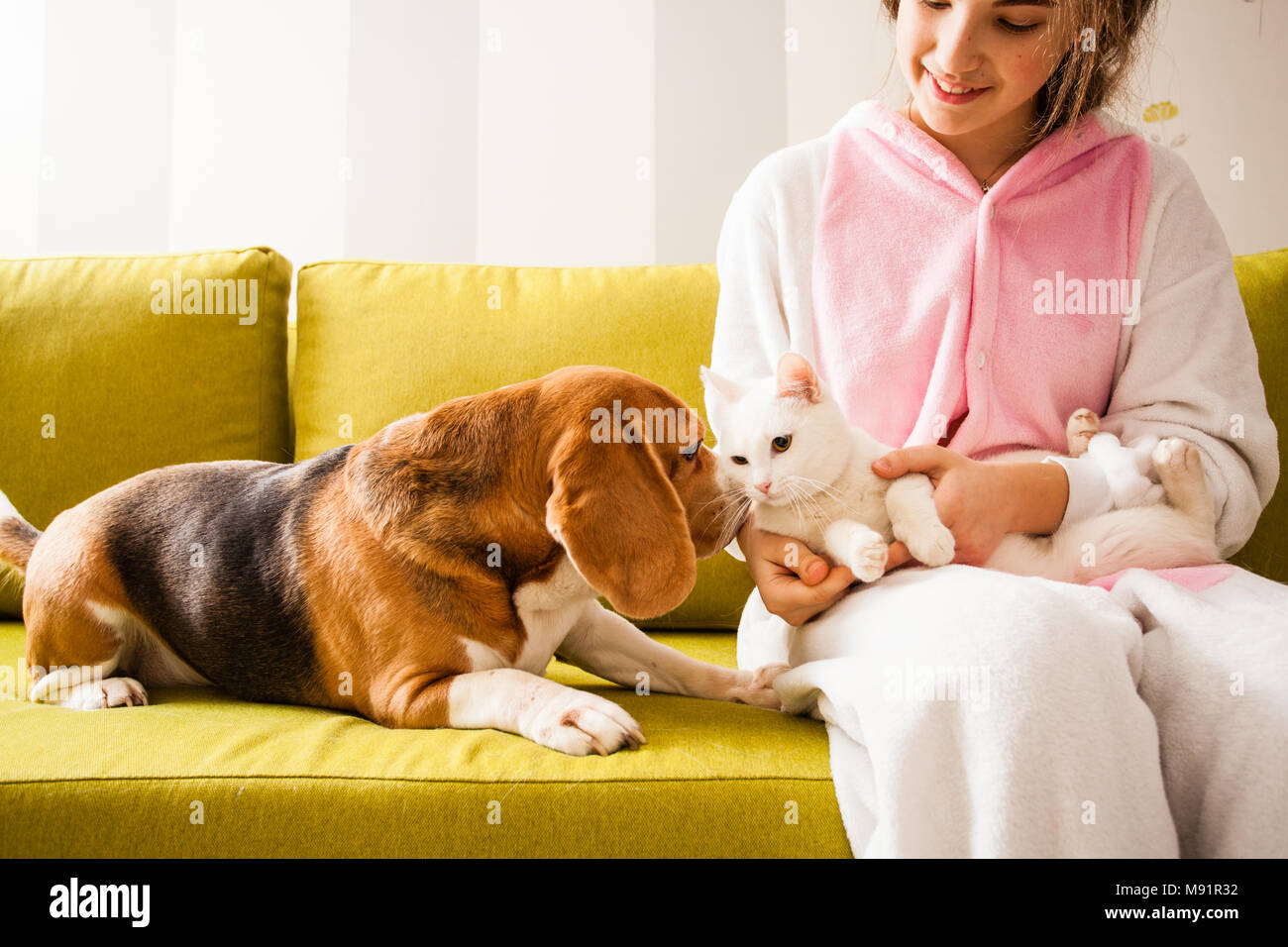 pets love each other - Stock Image