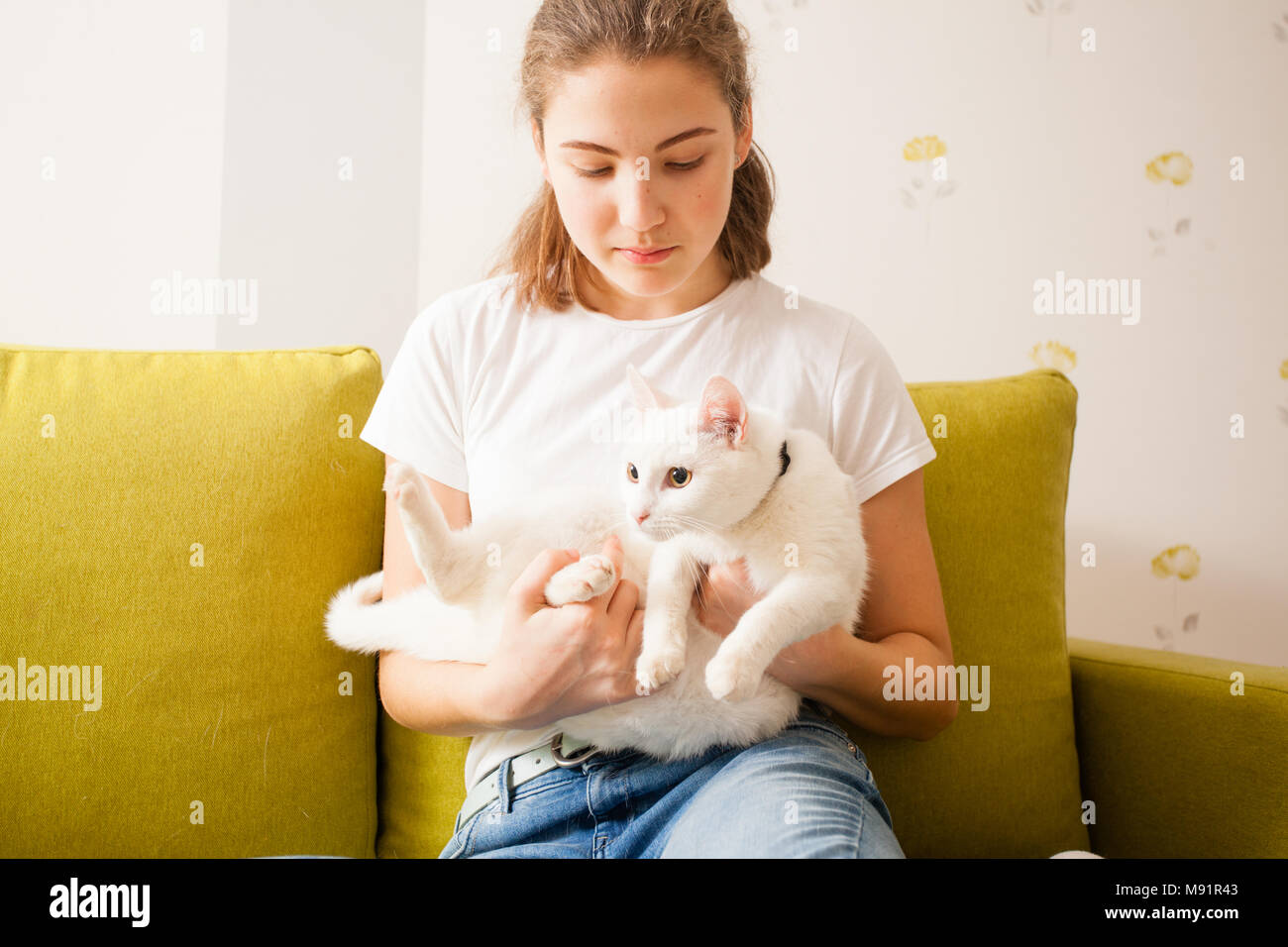 sweet white cat - Stock Image