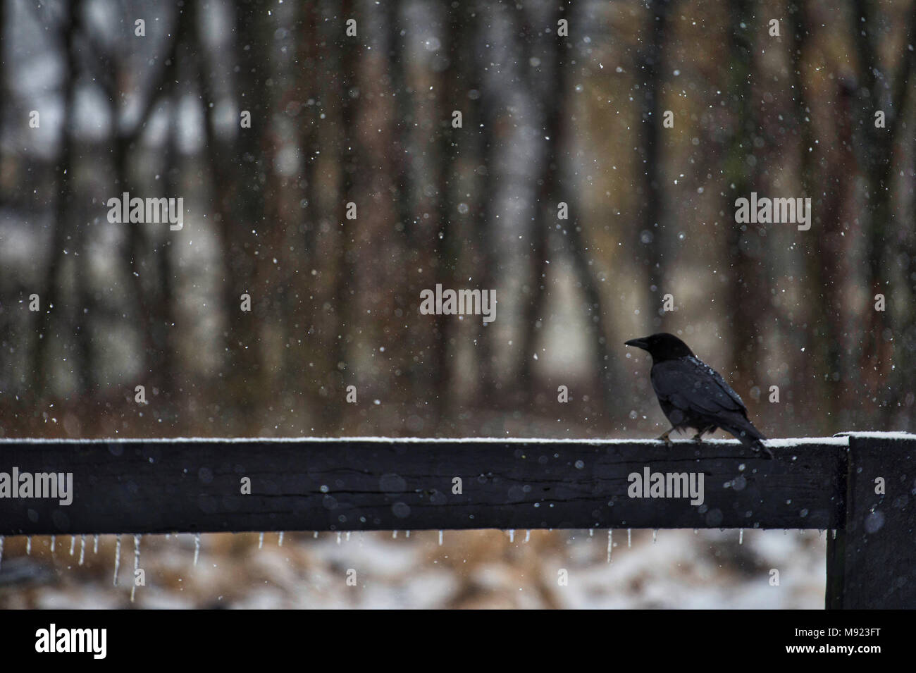 Dead Crow Fence Stock Photos & Dead Crow Fence Stock Images - Alamy