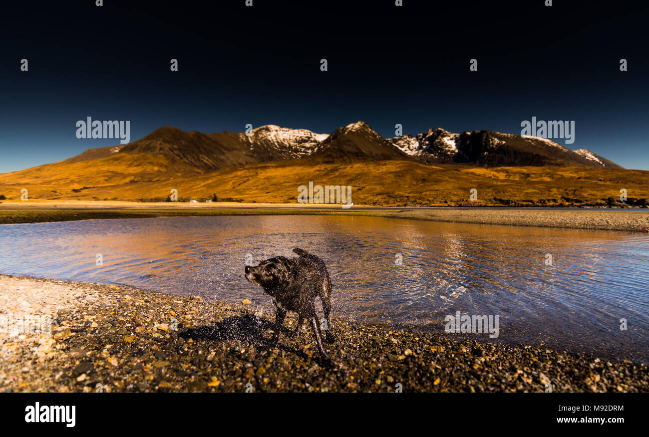 Dog on Spin Cycle at Glen Brittle Beach - Stock Image