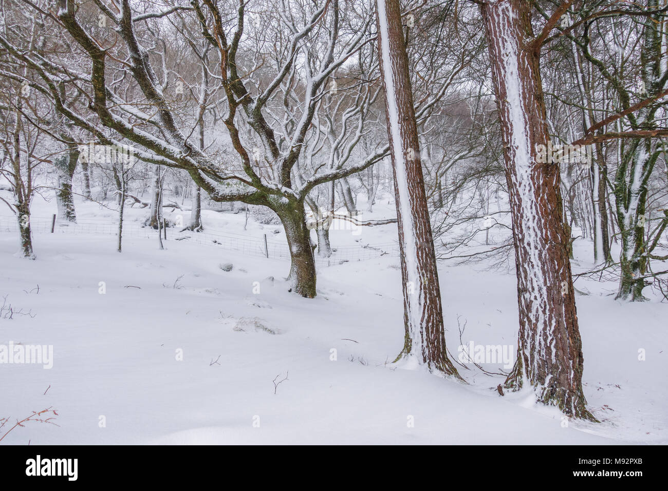 Landscape of Glendalough, Wicklow Mountains in deep snow - Ireland - Stock Image