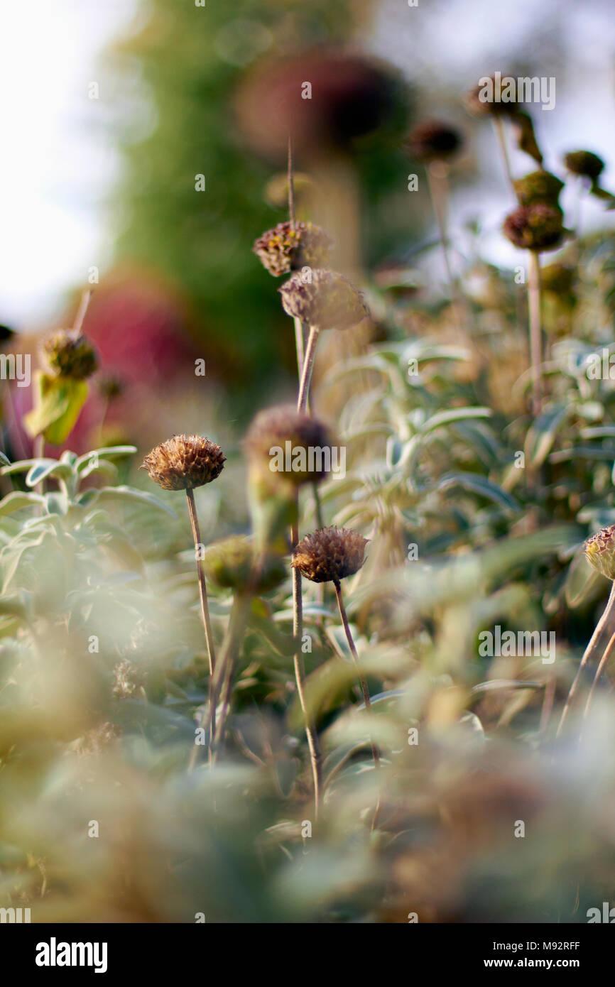 Autumn Plants, Grasses & Seedheads Stock Photo