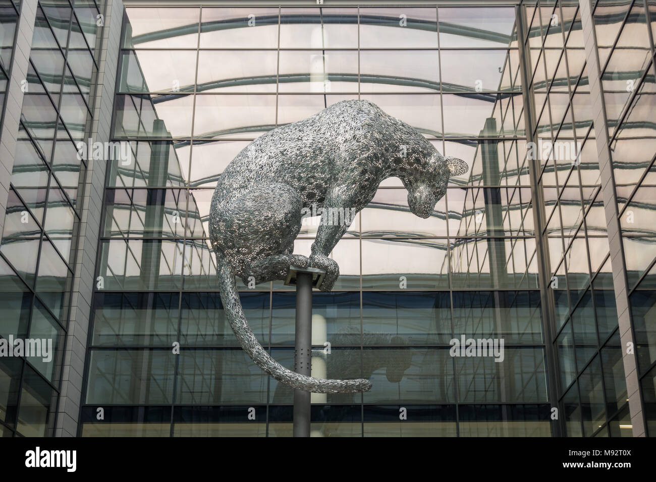 Poised - metal leopard sculpture at the new Marischal Square development, Aberdeen, Scotland, UK - Stock Image