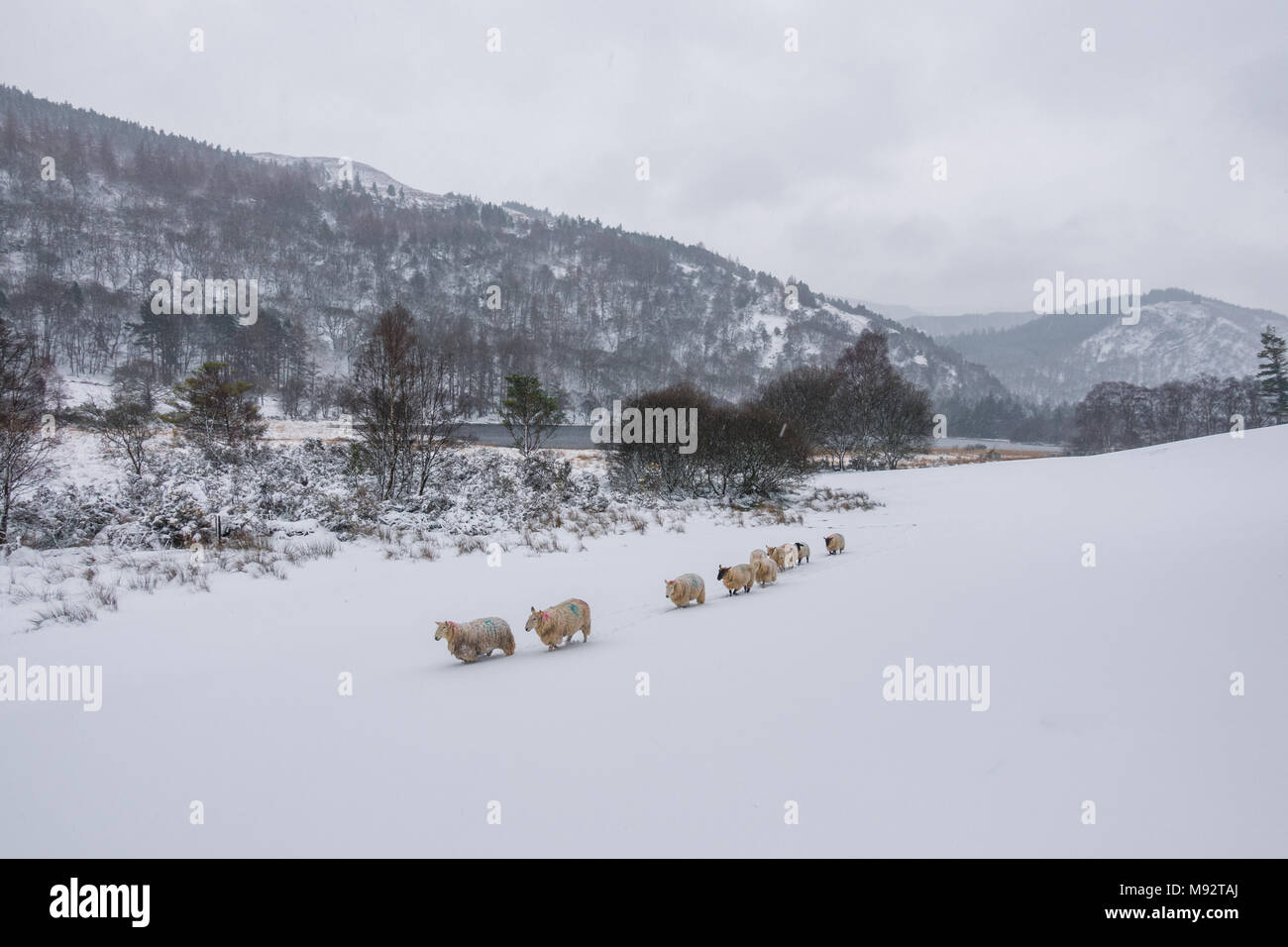 Winter in Wicklow Mountains - Ireland - Stock Image