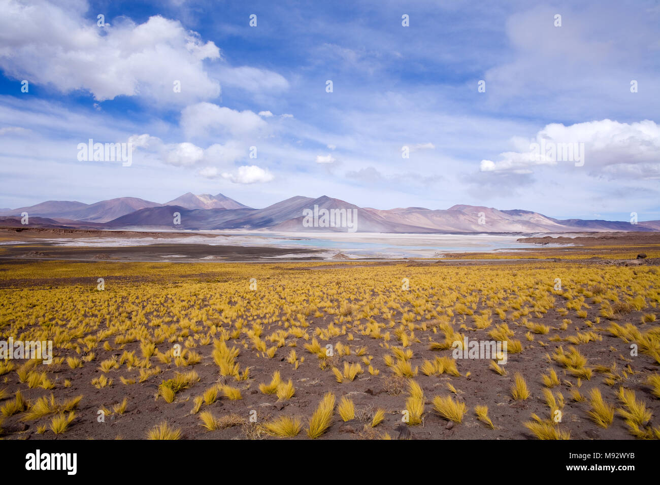 Salar de Aguas Calientes (Spanish for Hot Waters Salt Lake) and lagoon in the Altiplano (high Andean plateau) over 4000 meters over the sea level Stock Photo
