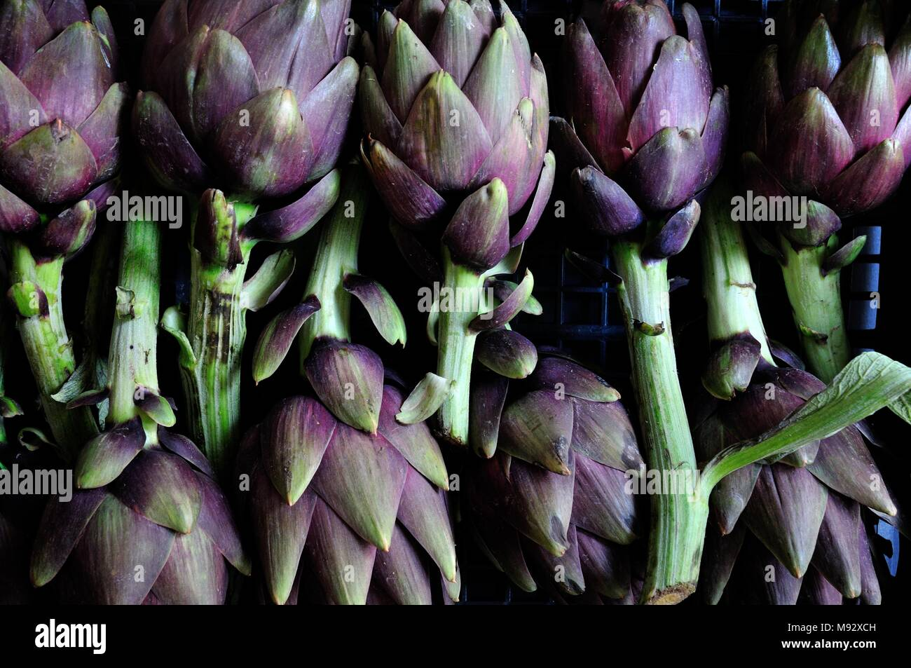 Nine green organic artichokes on gray background, top view. Healthy dieting and antioxidant vegetables. - Stock Image