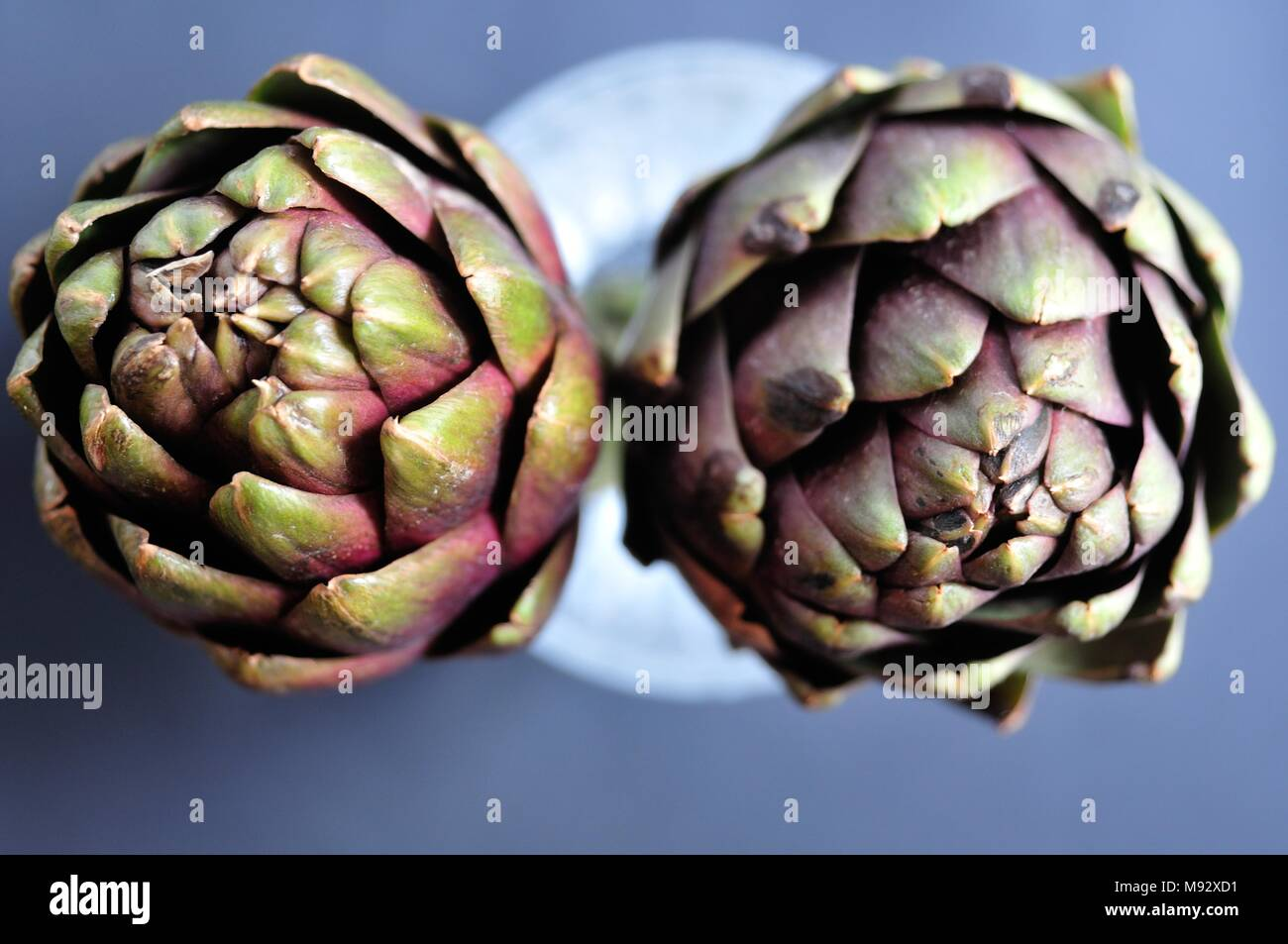 Two green organic artichokes on gray background, top view. Healthy dieting and antioxidant vegetables. - Stock Image