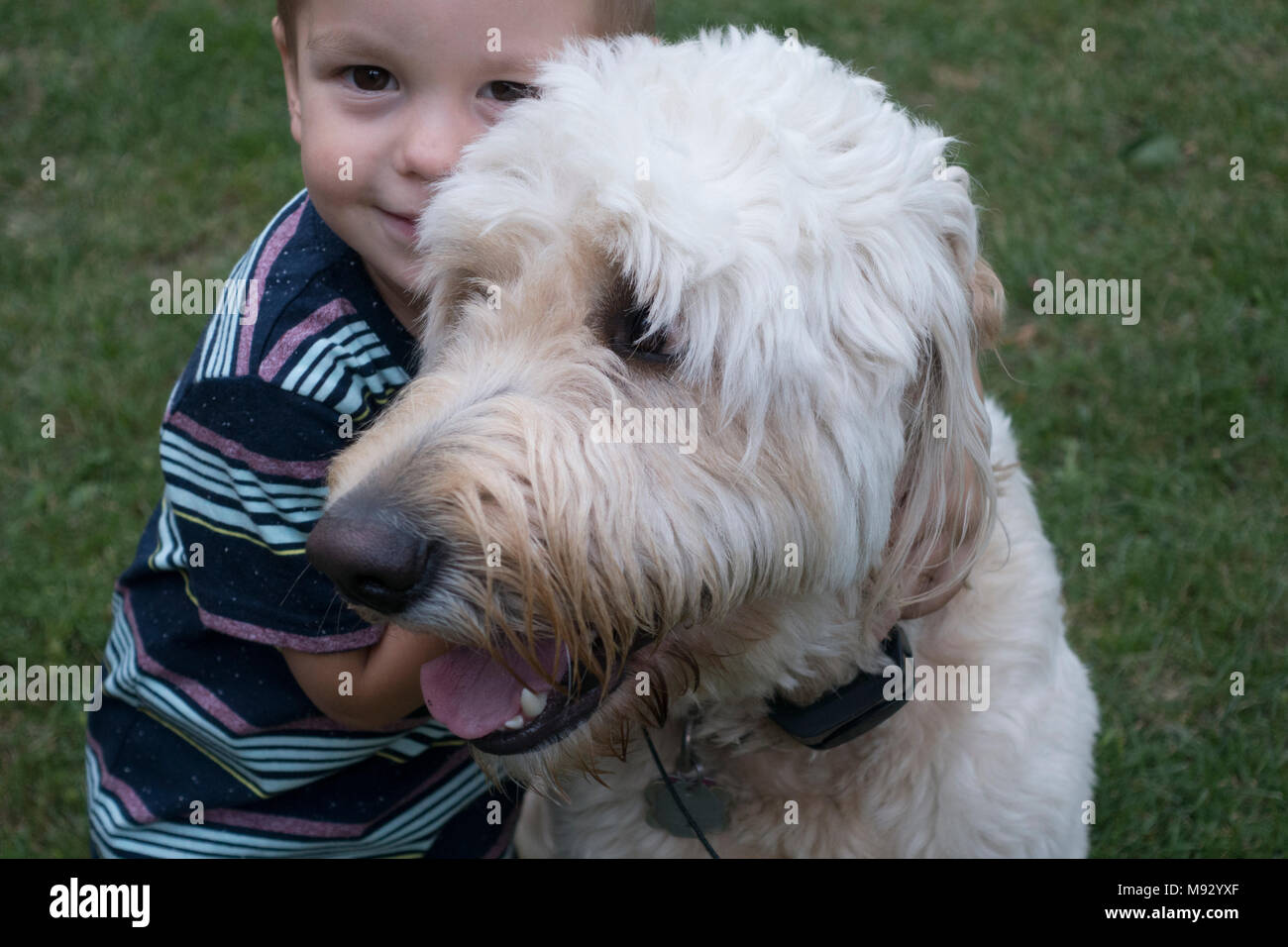 Young boy hugs his pet Goldendoodle designer dog in his yard. St Paul Minnesota MN USA - Stock Image
