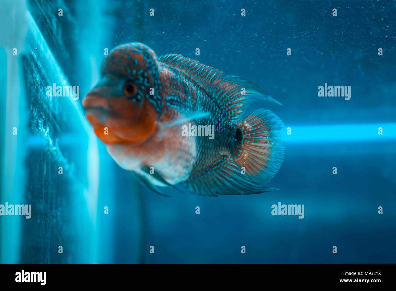 Close up of different types of fishes in a aquarium. Stock Photo