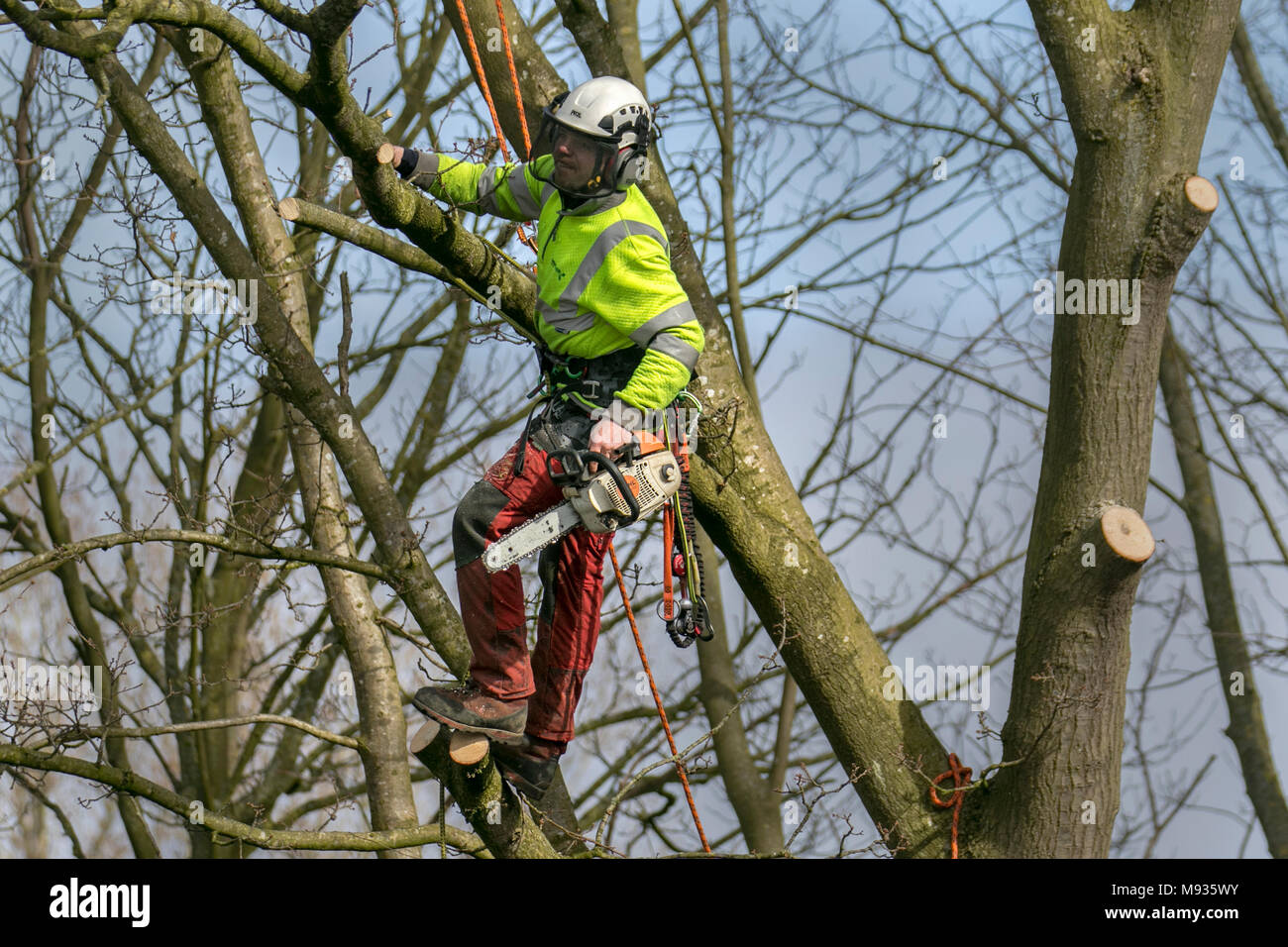 Tree Removal, equipment, lop, lopping, gardener, Pruning, Felling, tree, work, trim, tool, lopping branches, Crown Reduction, Crown Thinning by professional arborist, skilled tree surgeons working to BS 3998 (Recommendations for Tree Work) in Southport, Merseyside, UK Stock Photo