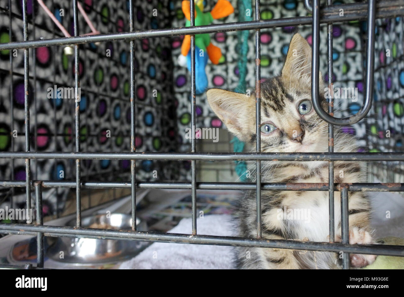 Sad kitten in a cage in animal shelter waiting for a new owner, looks at the camera. Real animals. Copy space - Stock Image