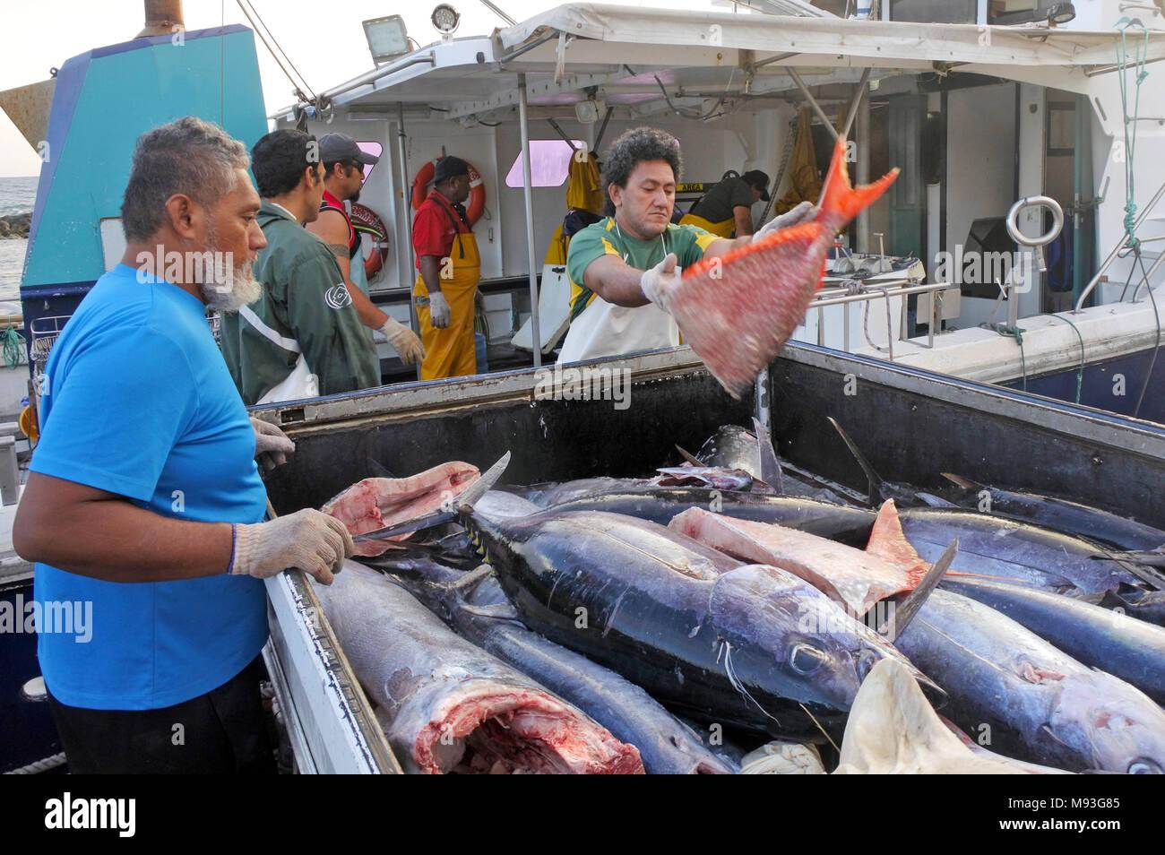 RAROTONGA - DEC 12 2017:Cook Islanders fishermen unloading their catch in Ports of Avatiu. Cook Islands exclusive economic zone territorial waters str - Stock Image