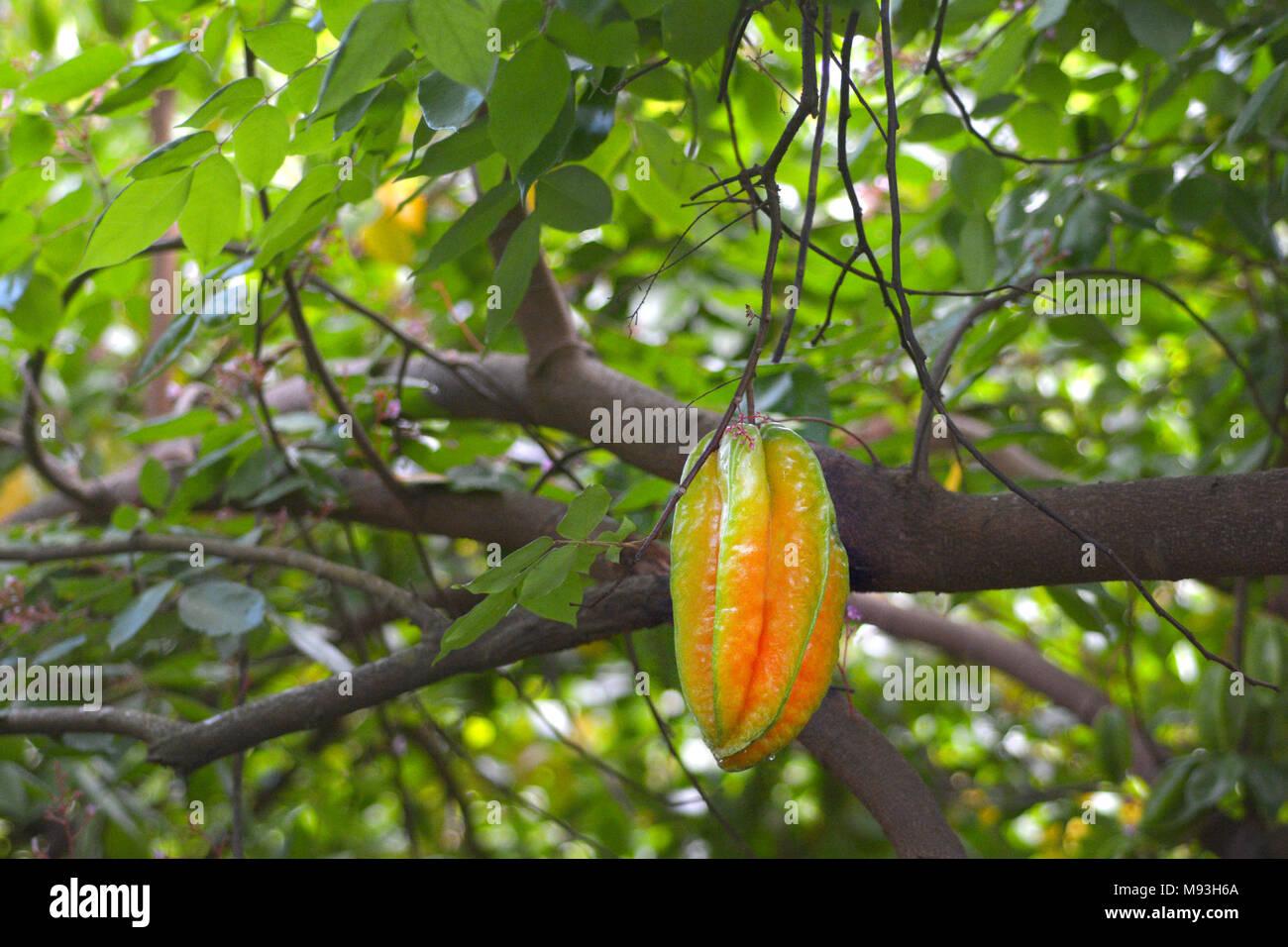 Tropical Fruit Rarotonga Cook Islands Stock Photos