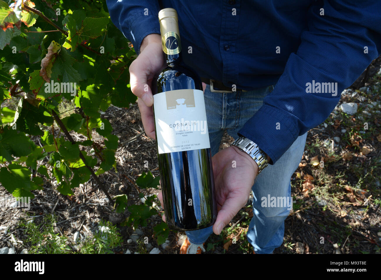 A swiss winemaker in a vineyard near Chamoson holding a bottle of Cornalin red wine, made of grapes grown in the Valais region of Switzerland. - Stock Image