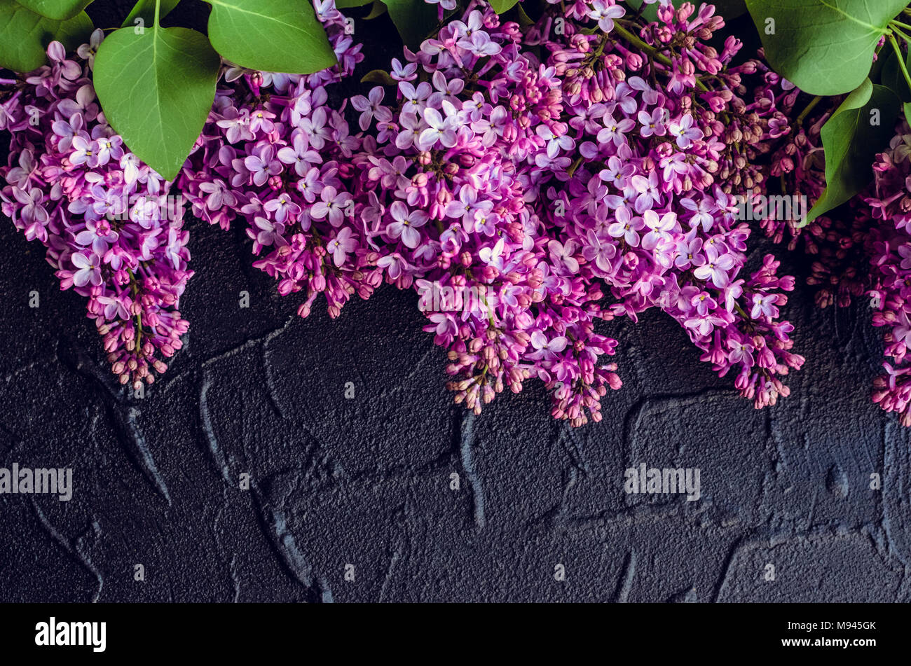 Beautiful spring flowers lilac on dark stone background with place for text. Syringa vulgaris. Happy Mother's Day greetings card. Top view. Copy space - Stock Image