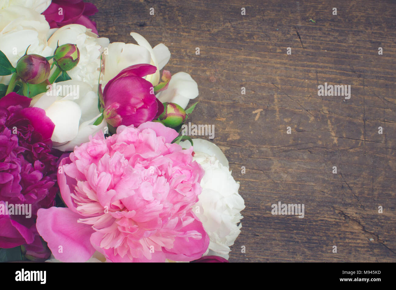 Peony Background Fuchsia Pink And White Peonies On Wooden Table