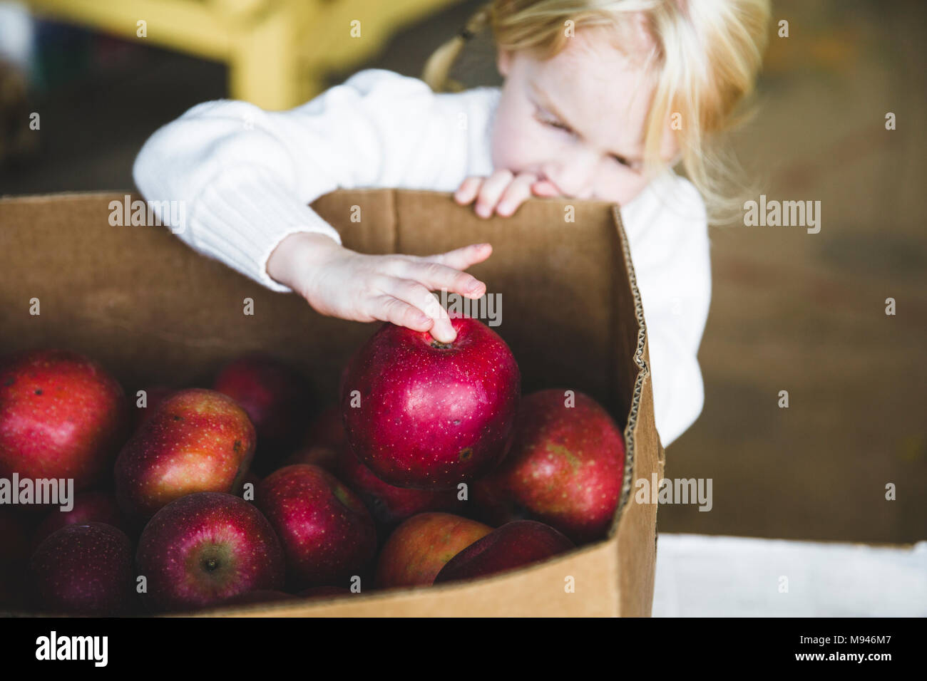 Girl picking up apple from box - Stock Image