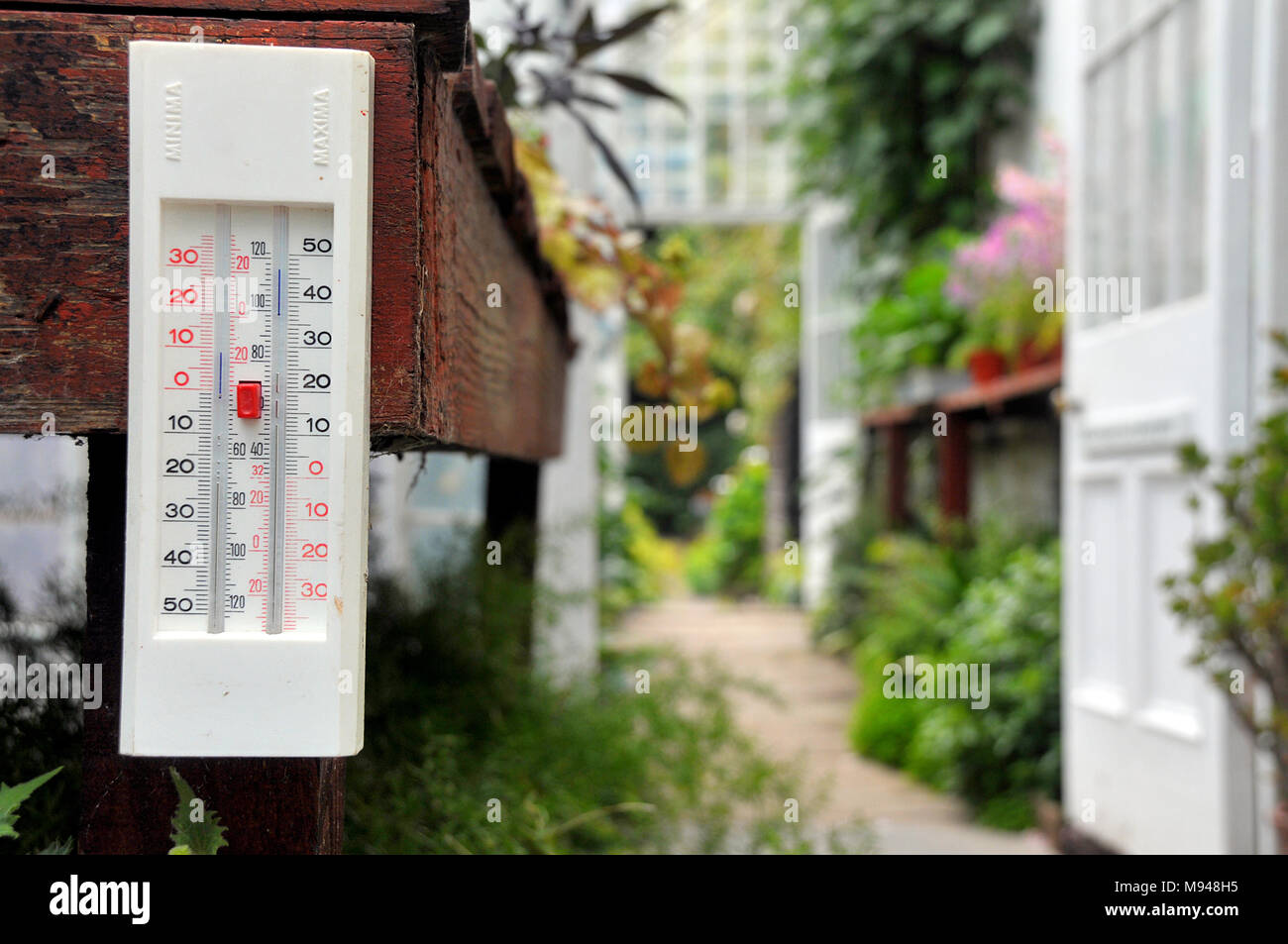 A greenhouse thermometer shows the temperature within a large garden greenhouse. - Stock Image