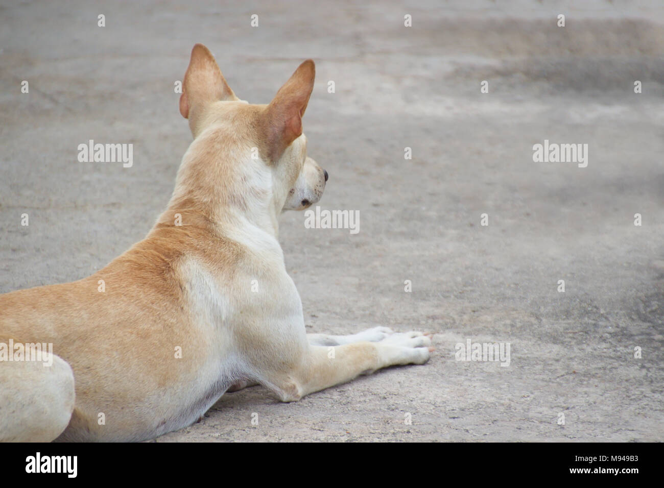Closed up lonely dog waiting crouched on ground - Stock Image