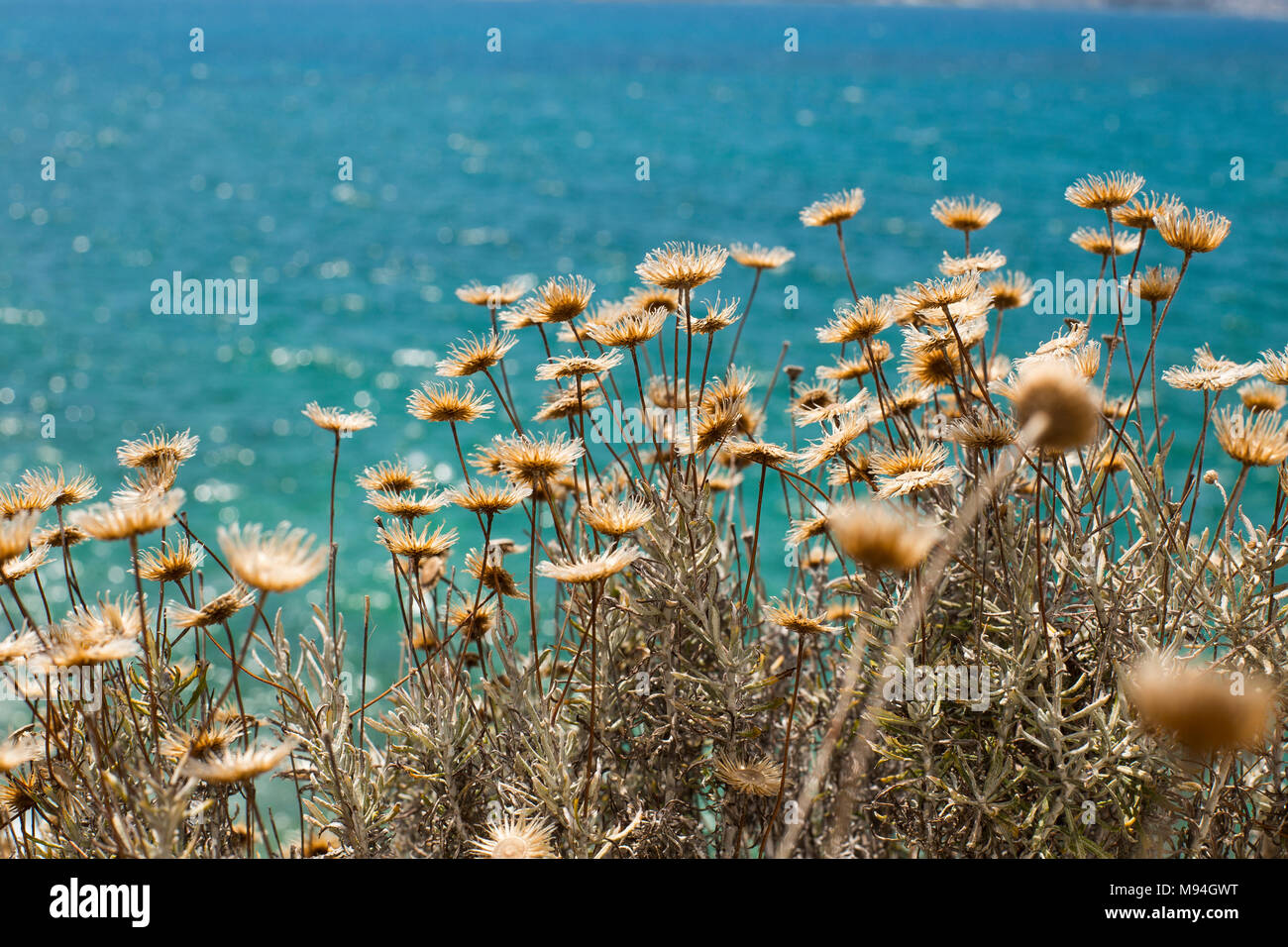 Sea view with yellow flowers: Iskele village at Cesme, Izmir, Turk - Stock Image