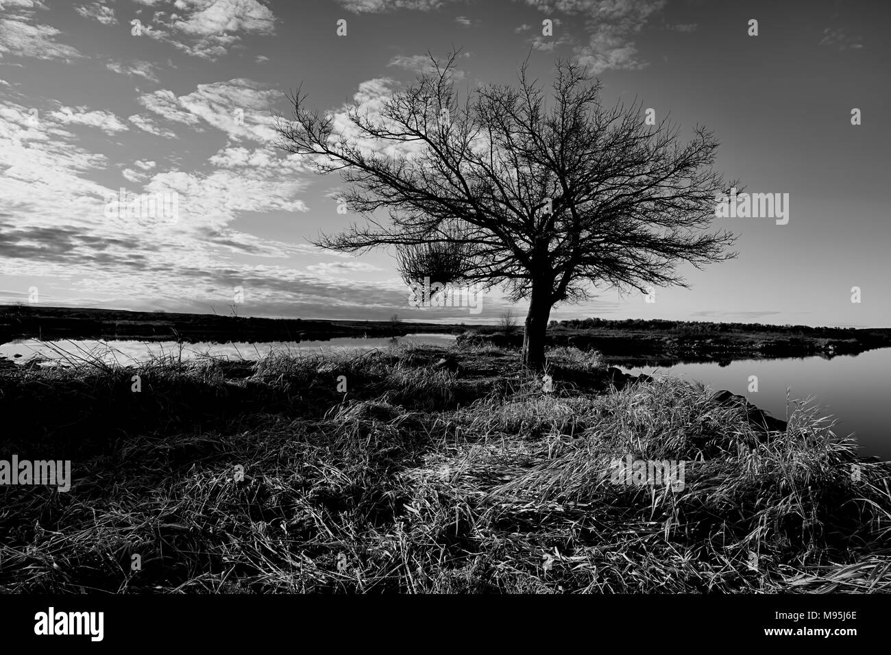 A scenic B&W image of a barren tree by the water at Scooteny Reservoir near Othello, Washington. - Stock Image