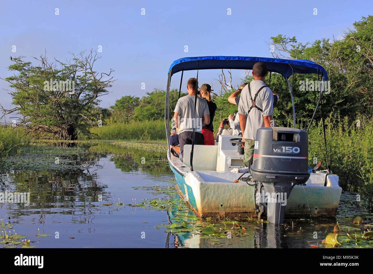 Tourists Enjoying An Early Morning Birdwatching Trip (spotting an Osprey) On The Lagoon At Crooked Tree Wildlife Sanctuary, Belize - Stock Image