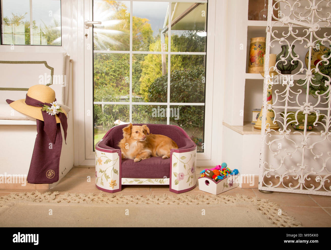 Home furnishing for pets, exquisite pet beds - Stock Image