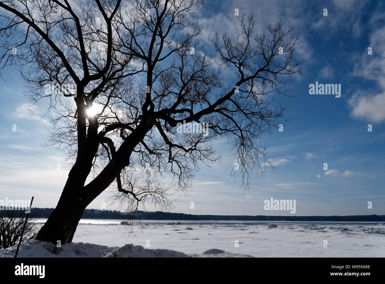 A bare tree silhouetted with the frozen St Lawrence river in Cap Rouge near Quebec City; Canada; - Stock Image