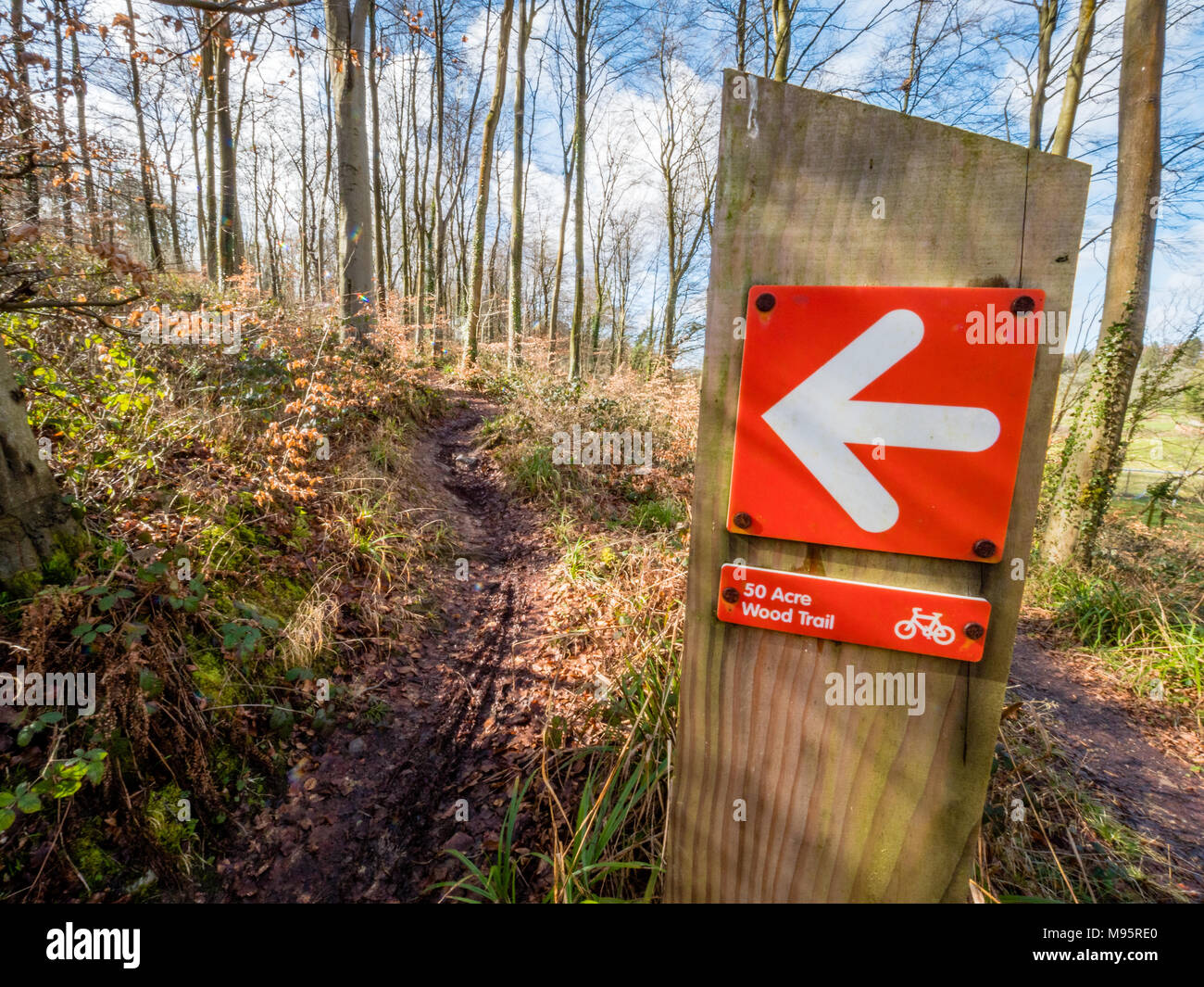 Red pointer and cycle trail through Fifty Acre Wood in the Gordano area of East Somerset UK - Stock Image