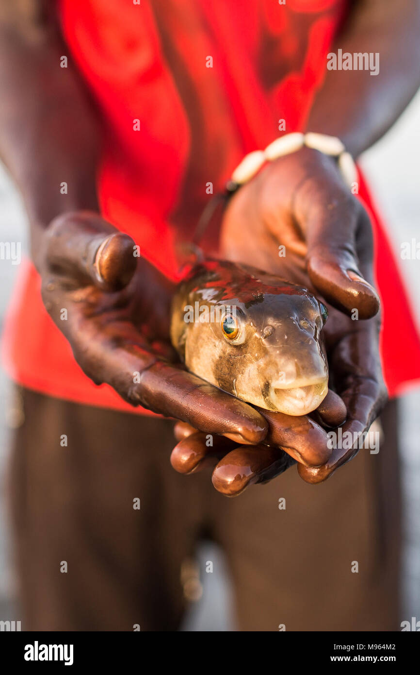 Bloated Puffer Fish Stock Photos & Bloated Puffer Fish Stock Images ...