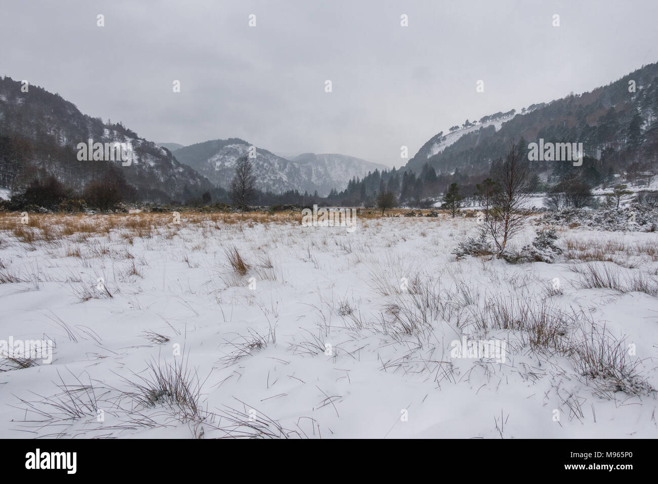Winter in Ireland - Stock Image