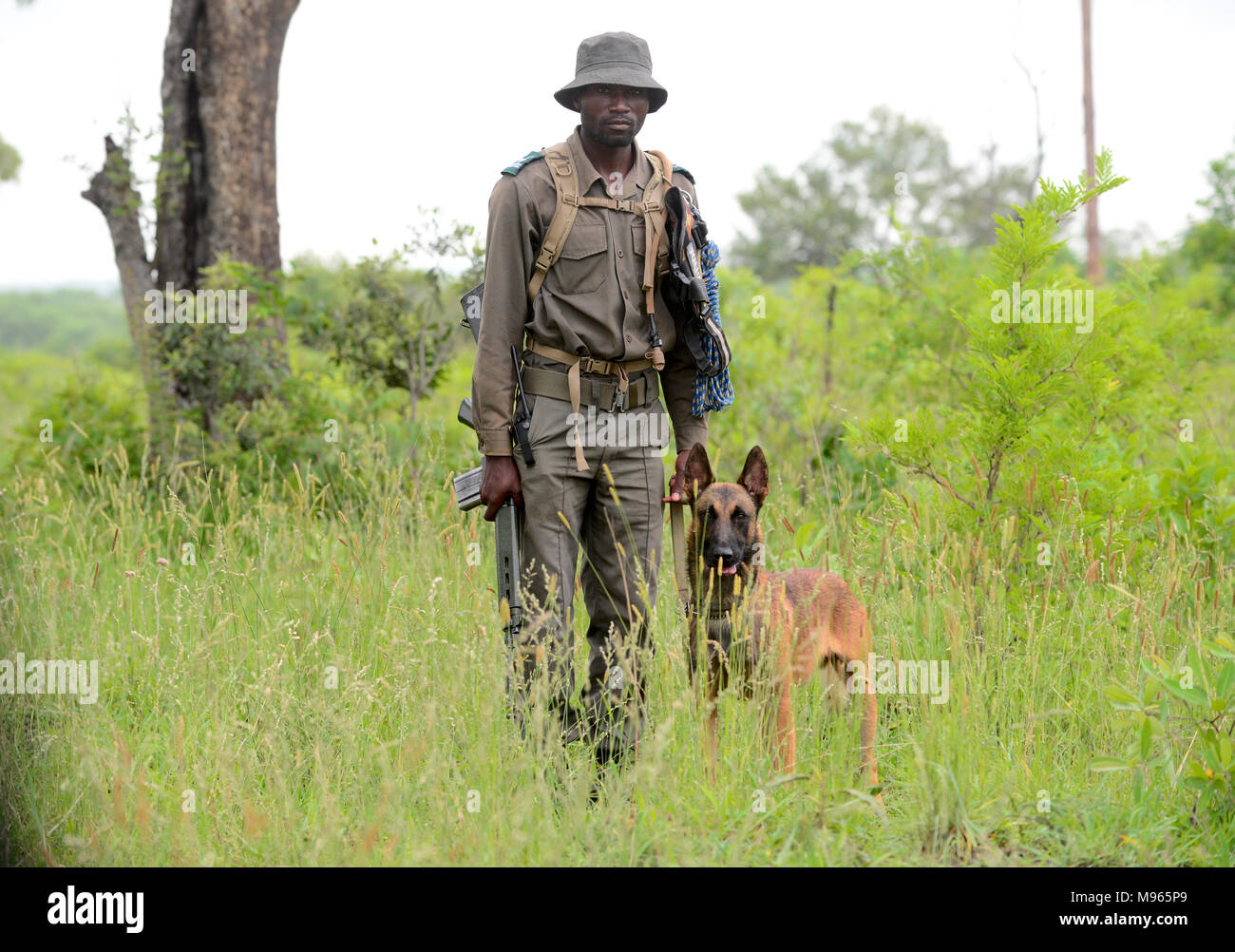 South Africa is a popular tourist destination for its blend of true African and European experiences. Kruger Park anti poaching dog and guide. - Stock Image