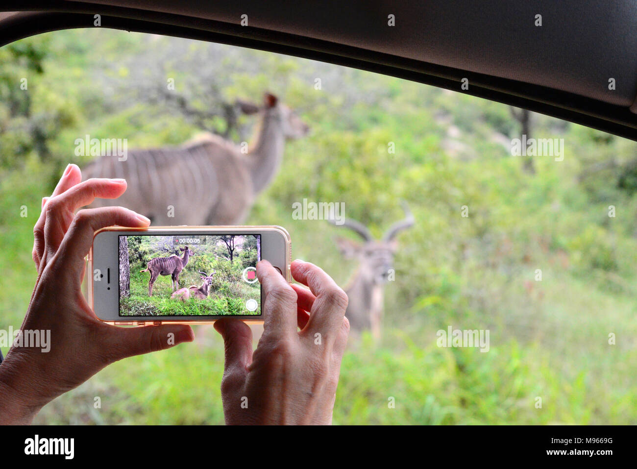 South Africa is a popular tourist destination for its blend of true African and European experiences. Kruger Park is world famous. Cell phone use. - Stock Image