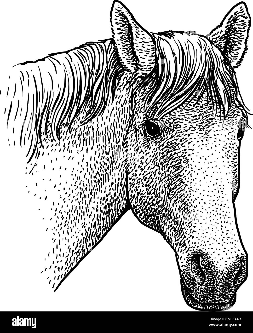 Horse head portrait illustration, drawing, engraving, ink, line art, vector - Stock Vector